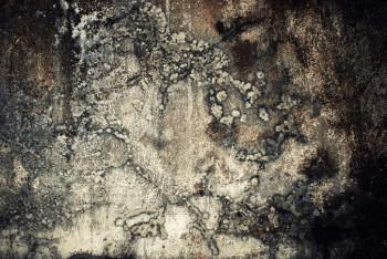 Mold spores cause problems