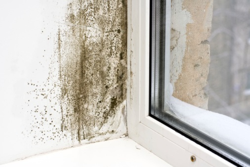 moldy patch near the window